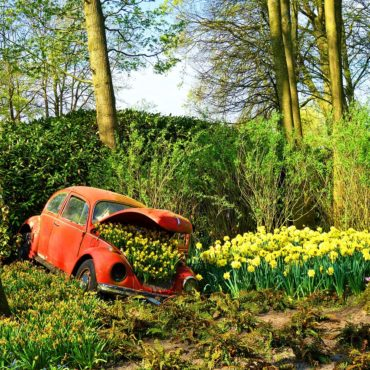 Voyager le printemps en lozère