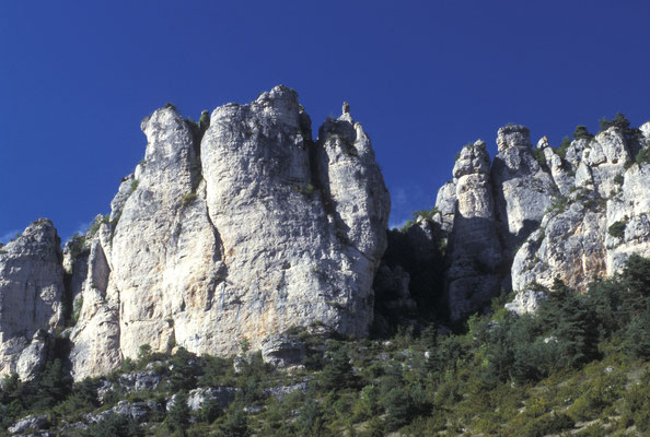 vautours tourisme lozere
